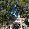 「初詣!日吉神社(大津町)→菊池神社→加藤神社→河尻神宮→北岡神社」くまちゃん・R子の子育て日記(64日目)