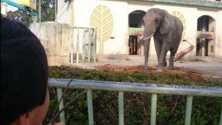 「観覧車も復活!熊本地震から10か月、熊本市動植物園が一部再開」くまちゃん・R子の子育て日記(72日目)