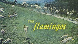 暑い夏に避暑地なハーモニーを!ザ・フラミンゴズのこの5曲!(+1)