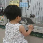 「七夕の願い事、ずっとママと一緒がいい!」くまちゃん・R子の子育て日記(29日目)