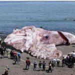 絶対イヤ!巨大化して日本に上陸、進化・二足歩行して欲しくない深海生物たち・・・