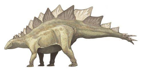 stegosaurus_02