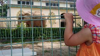 「熊本港でポケモンGO?、熊本市動植物園の今・・・」くまちゃん・R子の子育て日記(43日目)