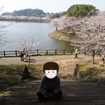 「加藤清正の築造・立岡(たちおか)池に映える立岡自然公園の桜|熊本・宇土市」くまとR子の子育て日記(149日目)