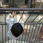 「大牟田市動物園でマンドリルの真似をする女の子、あらわる?」くまとR子の子育て日記(160日目)