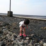 「宇土市・長浜海岸では20年ぶりに観光潮干狩り本格再開、僕らは長部田海床路(ながべたかいしょうろ)で潮干狩りもどき?」くまとR子の子育て日記(163日目)